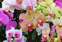 identity floral inspiration