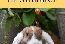 Raising Rabbits on the Homestead / All about how to raise rabbits on your homestead in cages or in colonies. Also the best things to feed them and the easiest ways to make it cost effective.