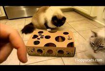 Cat Puzzle Toys