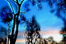 Tree Energy Field