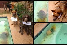 Dog Shaming  / dog shaming