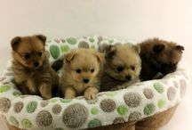 Puppies August 2015 / Puppies we have had during the month of August in the year 2015