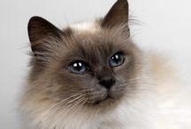 Meow ♥ / Zdjęcia kotów :)