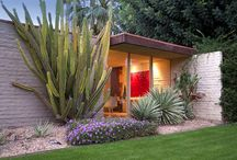 Our Cactus Garden