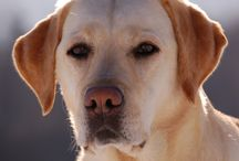 Pet Health / Information about pet health issues.