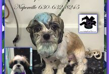 Blueberry Facials for your Pets at The UpScale Tail, Pet Grooming Salon, Naperville / Our Blueberry Facial to Whiten, Brighten and Sanitize