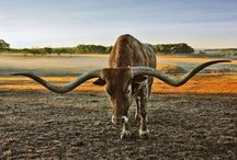 Deep in the heart of Texas / by Emily Smith