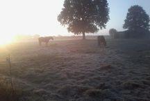 Hébergements avec votre cheval