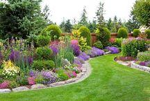 Красивые сады и растения