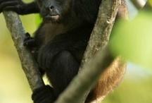 Wildlife in Costa Rica / by Pranamar Villas & Yoga Retreat