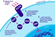 The Science Behind Cancer / Infographics on the science behind cancer from Cancer Research UK.