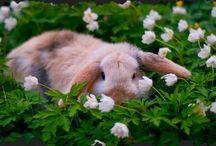 Bunnies  / by Jess McDermott