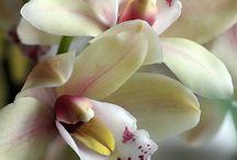 Orchidee *-* ♥