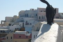 Cats In Greece!