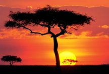 I'm going to Kenya! / by Laura E