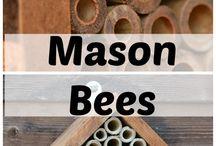 BZZZZ Bees! / 'Tis the season for Bees