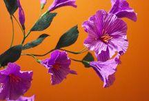 bunga batan tangan