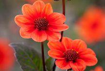Puutarhanhoito - gardening