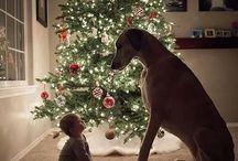 Christmas & Sinterklaasfeest