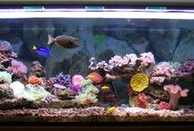 My Marine Aquarium / Pics of My Marine Aquarium