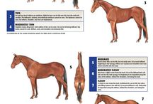 Equine Nutrition Info / Nutrition, specifically how it influences blood sugar levels, can affect electrolyte balance and therefore how long Equiwinner results last.  Here are some great resources for good feeding practices.