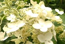 Brookgreen Gardens Flowers / by Brookgreen Gardens