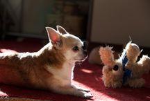PhotoMIRA /Животные/ / Любимые домашние животные.