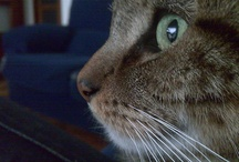 Simba, my cat (1998 - 2011) / Some photos of my cat, I loved him, he lived for 13 happy years :)