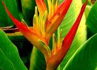 Flores / Nativas deco
