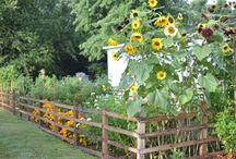 Rocky Hedge Farm Flower and Vegetable Garden / flower garden vegetable garden
