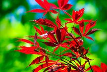 Color - Green & Red