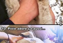 Animaux adorables