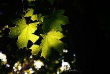 Nature / My photos of nature. ;)