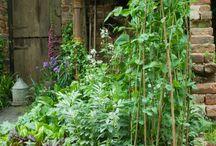Edible garden examples