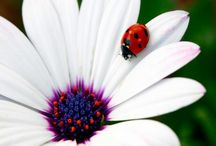 Ladybug Love / Here at M. Bottiglieri, we love ladybugs! Show us your favorite ladybug pictures on our social media and we will post them on here! Prizes will be given to those participating!   Send us your ladybugs on: Facebook:https://www.facebook.com/MBottiglieriNYC Twitter: @MBottiglieriNYC Instagram: mbottiglierinyc  What are you waiting for?! Show us your ladybugs!