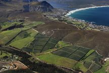 Whale Watching & Wine Tour / Spot the majestic Southern Right Whale while sipping on top class wines. Visit this tour at http://exploresideways.co.za/product/whales-wine-tour