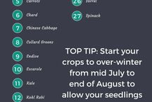 Cool Weather Crops