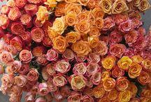 Orange Flowers / Different varieties of oranges flowers
