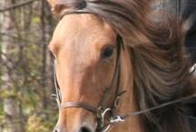 Heste / Heste