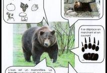 čo jedia zvieratá