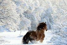 Lucky / Winter