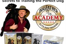 Dog Training Blog / Don Sullivan The DogFather discusses his dog training tips and techniques