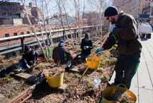 Spring Cutback / Every March, hundreds of staff and volunteers spend four weeks trimming back the stems, seed heads, and grasses that added such beauty to the High Line's gardens over the winter. Staff and volunteers carefully shear back 100,000 plants by hand during this massive horticultural endeavor, called Spring Cutback. Through this communal exercise, spring enters the High Line one tiny section at a time.