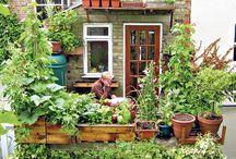 Garden / Pretty gardens and ideas