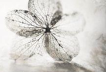 Grey... / by Ana Stanjo