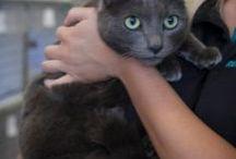 CATS URGENT FOR HOMES GET OFF DEATH ROW PLS AUSTRALIA / URGENT TO HELP CATS & KITTENS SYDNEY NSW AUSTRALIA