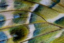 butterfly wings / watercolor and pencil drawings of butterfly wings of Southern Europe, one at a time to show their astonishing printed-on-paper-like, truly unfamiliar designs, and point to their symbolism of carefreeness and transformation.