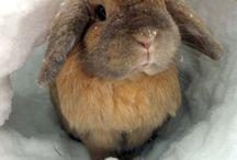 Bunny Love <3!