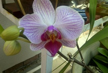 Orchids are the best