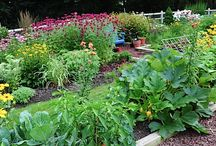 Dames Who Garden / Here are some pins authored by our dames around gardening, and pins that inspire our inner gardener from around the web.